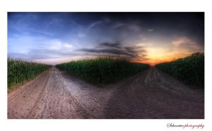 A day in the cornfield by matze-end