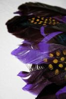 Violet Feathers by amandaWAY