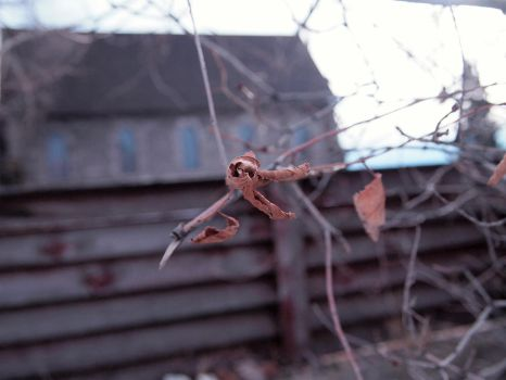 Withered RAW Image Part 1 by Filosodrag