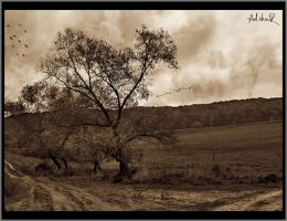 cloudy autumn by ad-shor