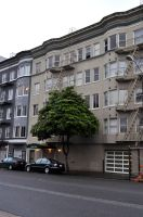 A Tree Grows In San Francisco by Amoryl