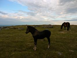 Mare and Foal on Bodmin by celtes