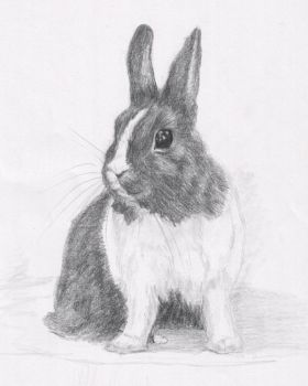 Waskily-Wabbit by PuNK-A-CaT