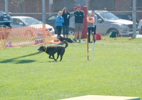 2014 Dog Festival, Agility Contest 8 by Miss-Tbones