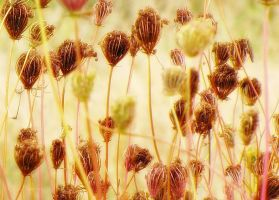Weeds by CanonSX20