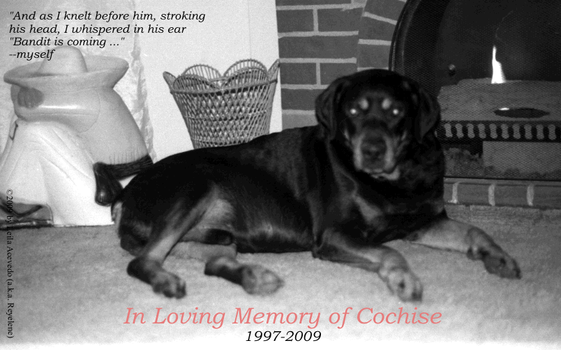 In Loving Memory of Cochise by DogsAnonymous