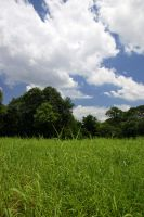 Fields and trees by theflickerees-stock