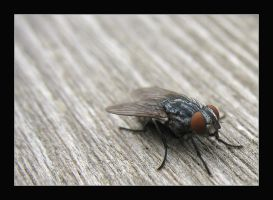 Fly 2 by MichelleMarie