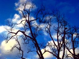 Vines Among the Clouds by seraphina7272