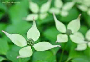 Spring Green by GlassHouse-1