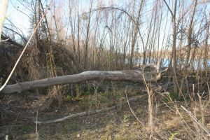 fallen tree by the river by goodiebagstock