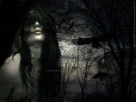 wallpaper crows by malenkax