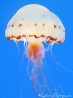 First Jellyfish by EuphoricPhotographs