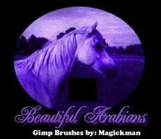 Beautiful Arabians for Gimp by blueeyedmagickman