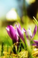 spring fever No.2 by landscapesaxony
