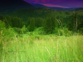 The green meadow by sharkfen