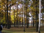 Fall in Birkenau by sivank