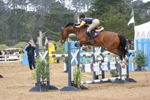 Bay Warmblood Show Jumper Pebble Beach by HorseStockPhotos