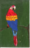 Parrot Painting by Purdy26