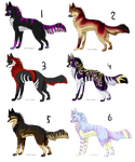 Canine adopts CLOSED by Osire