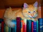 Cat on Books by BethLeda