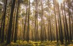Bright day in the woods by bardzomiprzykro