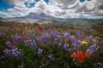 Wildflower Explosion by StevenDavisPhoto