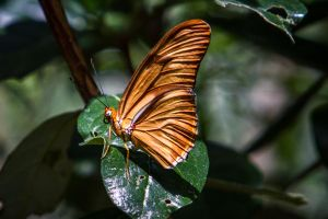 Brown wings by 904PhotoPhactory
