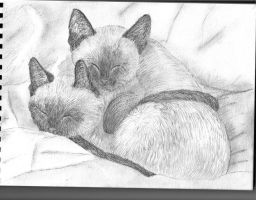 Siamese Kittens by Meorow