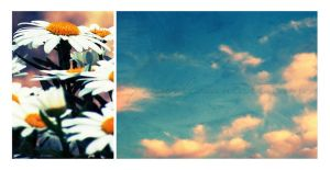 Daisies and Sky. by pasn