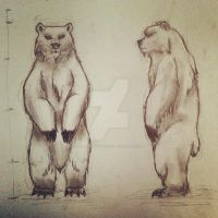 Bear proportions by Sketching-Sketches