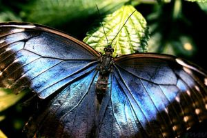 On Tattered Wings by FriendFrog