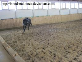 Horse lunging 03 by Bloodsoul-Stock