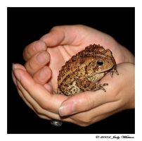 A Toad in the Hand..... by Tazzy-