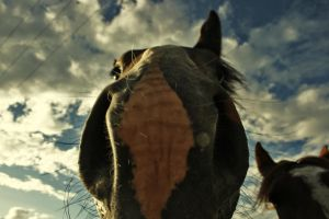 Horse close-up by Panoram