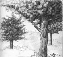 Tree Sketch by Thesis-D