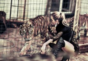 tigers by LadyMartist