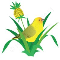 Saffron finch and pineapple plant by meihua