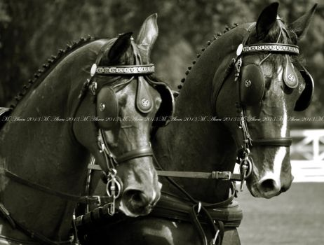 Horses (Iberian Cup 2013 - Portugal ) by mlca76