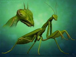 Mantis Religiosa by sash4all