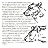hyena vs wolf comparison by Tianithen