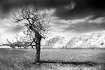 Infrared by DWBasin2