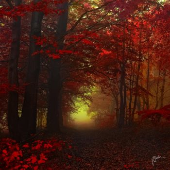 -Invitation to another dimension- by Janek-Sedlar