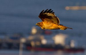 Flying Over the Port by Grouper