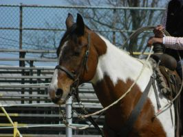 Pick Up Horse Stock by Rising-High-Ranch