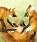 Maned Wolf Pups by FlurryofFlames
