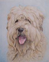 Frazer- Dog portrait by lucx91