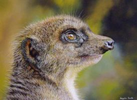 Meerkat (Pastel Pencils) by AngelaMaySmith