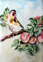 Goldfinch by danuta50