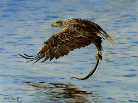 Sea Eagle Painting by waynedowsent
